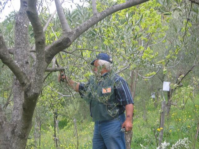 Bocchigliero 25 Aprile 2011 campionato calabrese di potatura